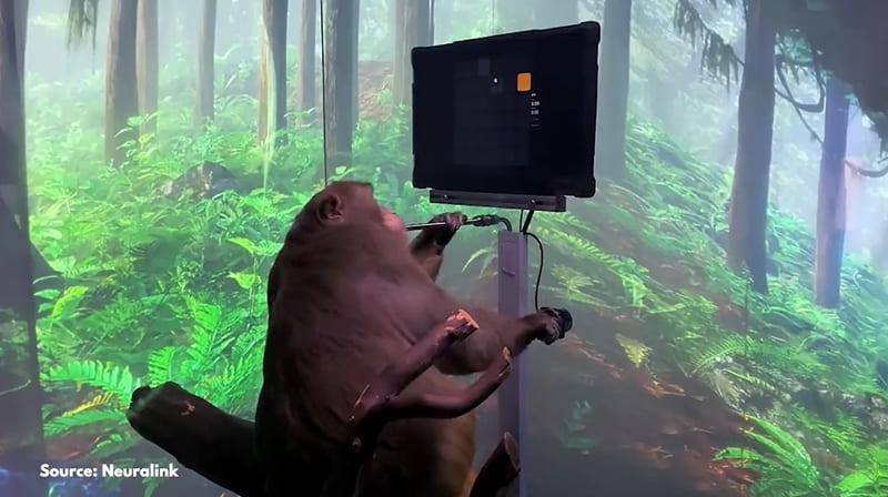 Neuralink singe joue à pong